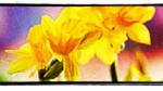 kontaktblad korskyrkan mariestad våren 2012